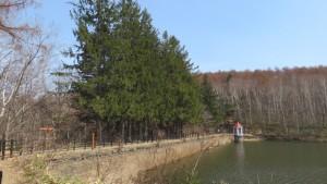 えん堤、取水塔とヨーロッパトウヒ並木