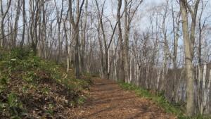 木立の中の園路