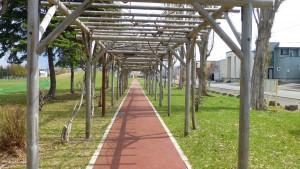 ふじ棚と園路