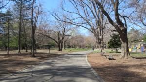 園路と木立