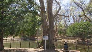 上の池とハルニレの巨木