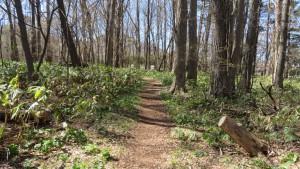 「ユースの森」の散策路