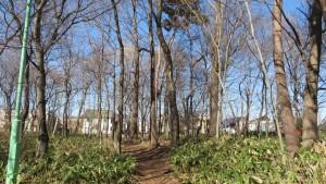 「補助競技場の森」散策路と木立