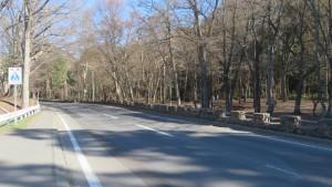 市道円山線と円山公園の木立