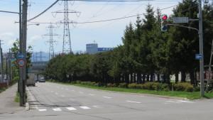 清田通中央分離帯のドイツトウヒ並木を望む【平和通】