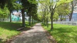 園路とドイツトウヒ・ケヤキ並木【大谷地流通団地東側緑地】